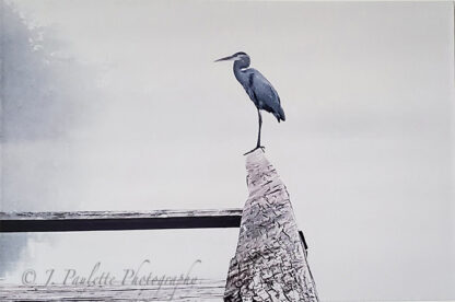 heron sitting on a fence in the fog